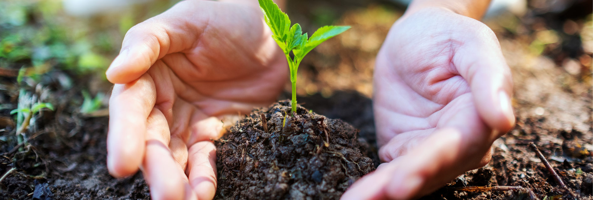 Leadnurturing and lead management - ways to success